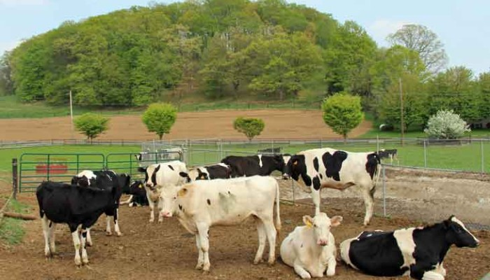 Lancaster County PA Dairy farms