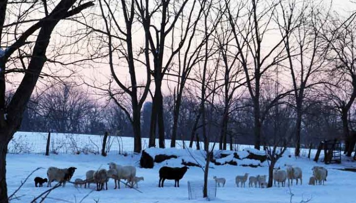 Lancaster County Bed and Breakfast in the winter