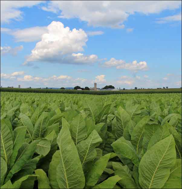 Enjoy the scenic farmland which you'll find all around our Lancaster PA Bed and Breakfast Inns.