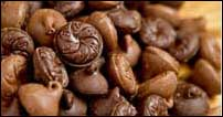 Wilbur Chocolates, Lititz PA